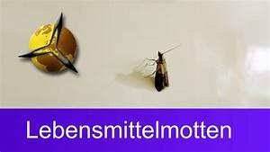 Motten In Wohnung : lebensmittelmotten bek mpfen motten in der k che loswerden youtube ~ A.2002-acura-tl-radio.info Haus und Dekorationen