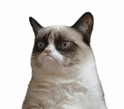 Cat Transparent Grumpy Sad Meme Head Funny