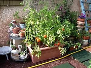 Quand Planter Les Tomates Cerises : ouf j 39 ai tant a raconter jo tourtit ~ Farleysfitness.com Idées de Décoration