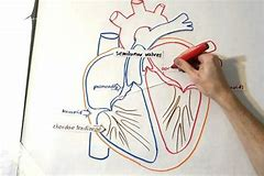 High quality images for easy way to draw heart diagram hd wallpapers easy way to draw heart diagram ccuart Image collections