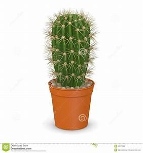 Pot A Cactus : cactus flower in pot13 stock illustration illustration of america 23571700 ~ Farleysfitness.com Idées de Décoration