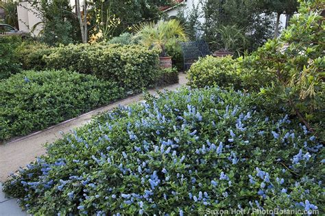 garden shrubs gardening with native plants