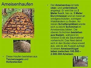 Ameisen Im Winter Finden : das projekt insekten ppt video online herunterladen ~ Lizthompson.info Haus und Dekorationen