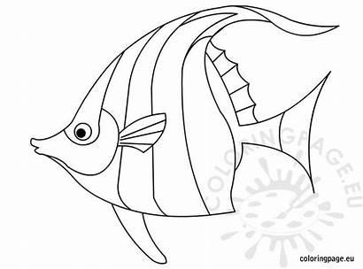 Coloring Fish Angelfish Template