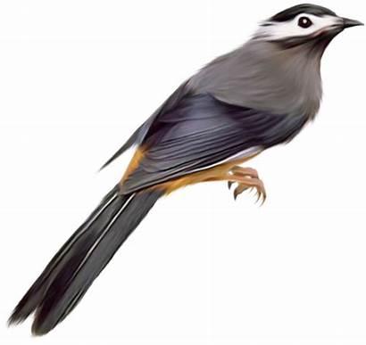 Burung Lukisan Gambar Fondo Sin Bird Birds