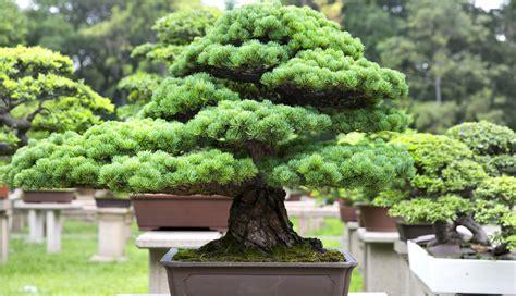 table de cuisine pour petit espace la culture du bonsaï tout un