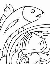 Seafood Coloring Pages Tuna Results sketch template