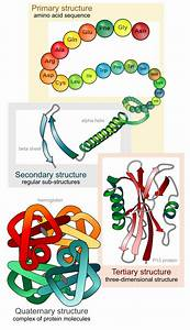 Biopharmaceutical Protein Structure  U2013 Part 2