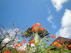 Arbuste Persistant En Pot : madinina l ile aux fleurs le jardin de l 39 echassi re ~ Premium-room.com Idées de Décoration
