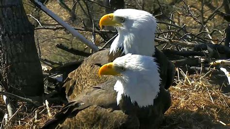 aef dc eagle cam tfl makes an appearance 02 183 13 183 17