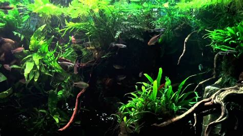 biotope tank african planted gallon