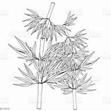 Bamboo China Coloring Tree Vector Japan Tropical Plant Asia East sketch template