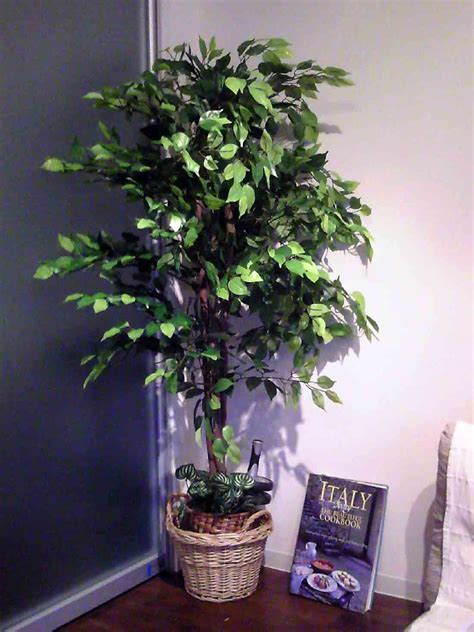 indoor trees artificial indoor trees fake indoor trees pros cons of fake vs real