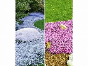 Bodendecker Blaue Blüten : bodendecker kollektion pink und blau 6 pflanzen lidl deutschland ~ Frokenaadalensverden.com Haus und Dekorationen