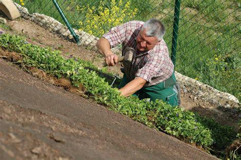 Hang Bepflanzen Bodendecker. Steingarten Hang St Tzmauer