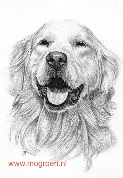 potlood deviantart golden retriever drawing pencil portrait dog paintings