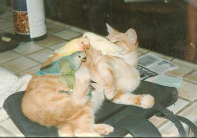 training  dog  cat     pet birds