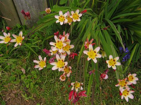 bulbs corms tubers the trees flowers of whangarei