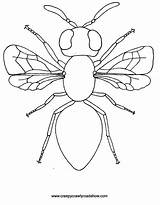 Insect Coloring Pages Creepy Bugs Colouring Drawing Clipart Printable Crawlies Crawlers Insects Bug Cartoon Templates Clip Drawings Bee Getdrawings Painting sketch template