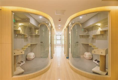 6 Of The World's Most Luxurious Cat Hotels Styletails