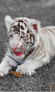 Wildlife World Zoo & Aquarium Rings in the New Year with ...