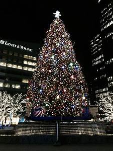 World's Largest & Tallest Christmas Trees, Delivery ...