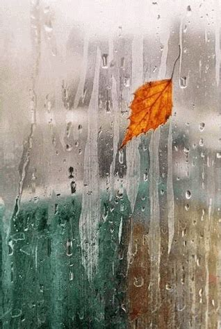 rain drizzling   window pictures   images