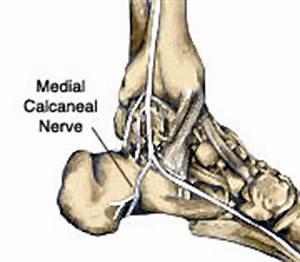 Medial Calcaneal Nerve | Flickr - Photo Sharing!