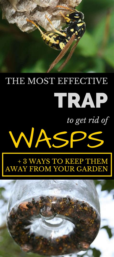 how to get rid of hornets the most effective trap to get rid of wasps 3 ways to keep them away from your garden