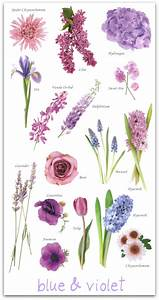 Blue And Violet Flower Guide Pictures  Photos  And Images
