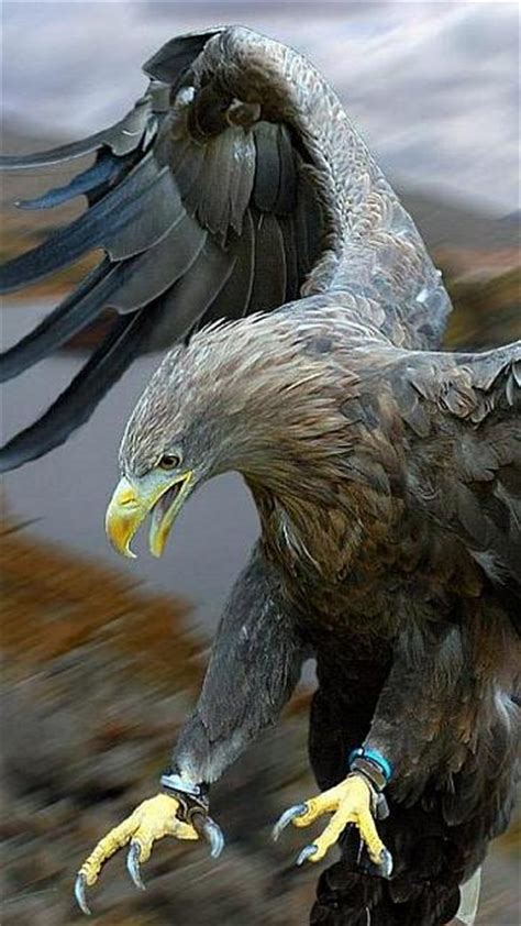 Animated Eagle Wallpaper - animated eagle wallpapers