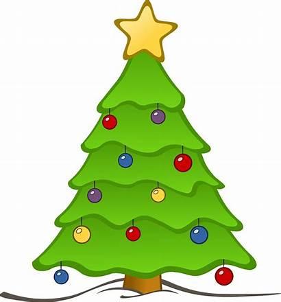 Tree Christmas Xmas Pickup Schedule Waste