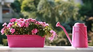Sommerblumen Für Schatten : blumen f r den sonnigen balkon ~ Michelbontemps.com Haus und Dekorationen