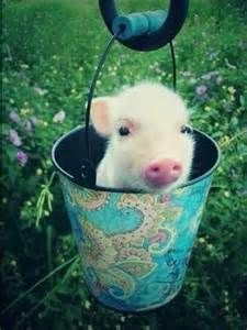 Baby Cutest Pig Ever