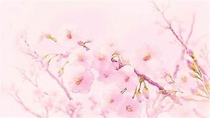 Cherry Anime Blossoms Sakura Scenery Blossom Gifs