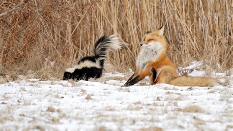 funny winter animal wallpaper  images