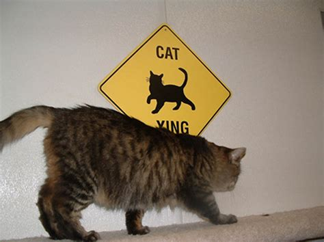 better than cats dogs why facts reasons open fox cat buzzfeed convince purring indisputable woofing scientific question pet these directions