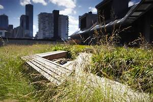 Sample Risk Management Cover Letter Green Roofs For Energy Efficiency