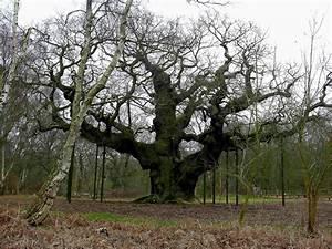 Foret De Sherwood : for t de sherwood ~ Voncanada.com Idées de Décoration
