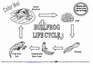 What are some activities to teach life cycles for the 2nd ...