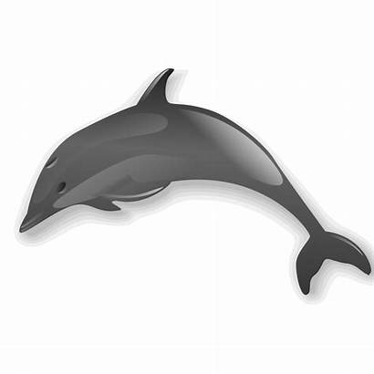 Dolphin Svg Bottlenose Clip Clipart Archivo Ficheiro