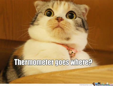 Suprised Meme - surprised cat memes image memes at relatably com