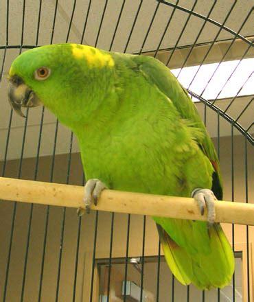 pet parrot pet parrots help severely injured us fireman regain speech topnews