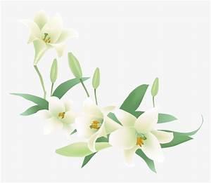 des fleurs de lys blanc fleur de dessin anime peint des With affiche chambre bébé avec fleur lys blanc