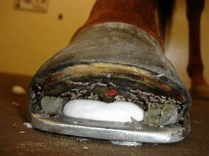 How to apply MDT Dressings on Horses and Other Animals ...