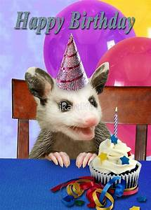 """""""Birthday Opossum"""" Greeting Cards by jkartlife 