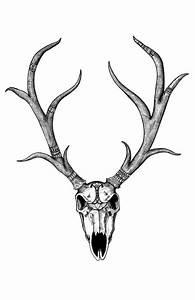 """""""Diplomatic Deer Skull"""" Deer Skull Black and White ..."""