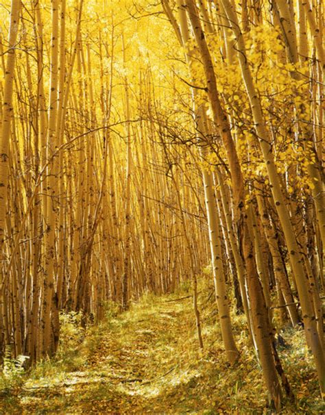 yellow forest amazing natural forest image