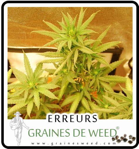 fertiliser cannabis graines de