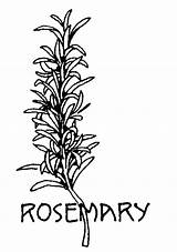 Herbs Coloring Pages Herb Printable Spices Drawings Medieval Rosemary Line Flower Plant Plants Drawing Embroidery Easy Class Duck Donald Results sketch template